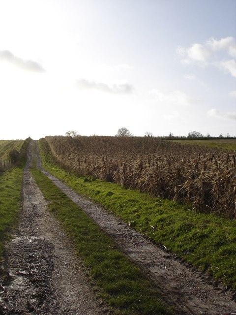 Track and Pheasant feeding strip