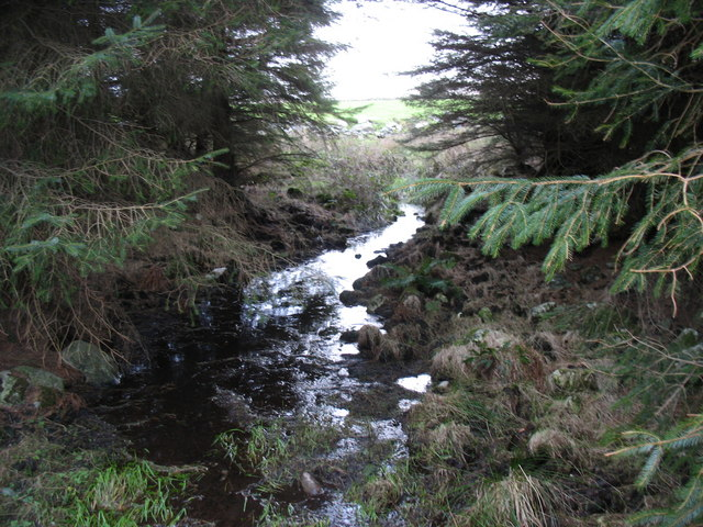 A forest watercourse