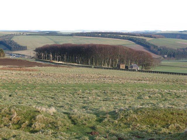 Townhead Plantation