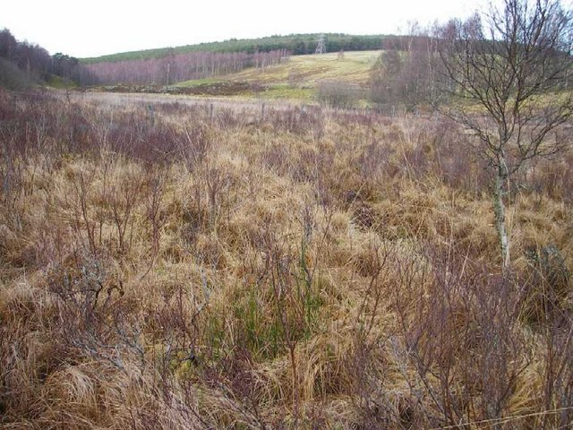 Boggy pasture in shallow upland valley