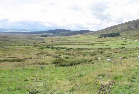 Rough grazing above Nethy Bridge
