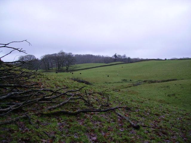 Farmland above High Cunsey