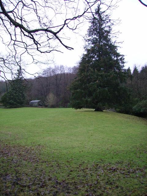 Woodland, Esthwaite Water