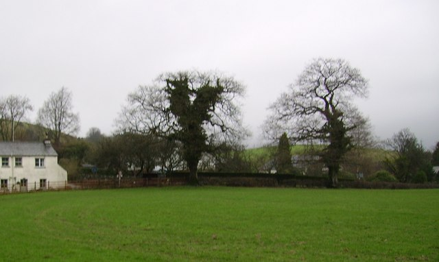 Trees, Roger Ground