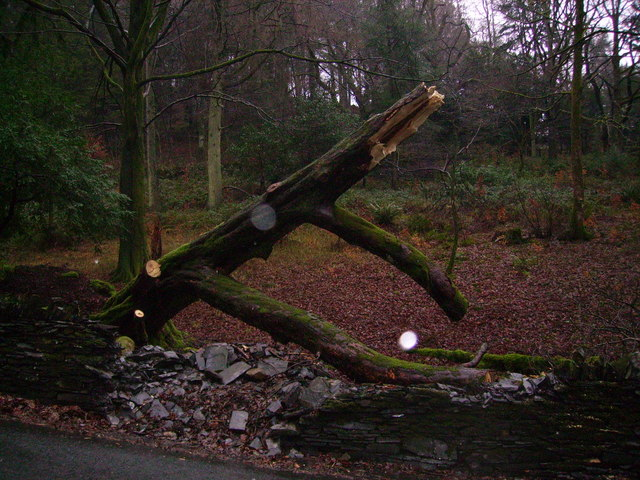 Fallen Tree, Monk Coniston