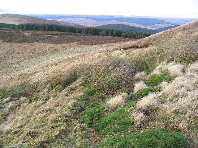 Upland hillside