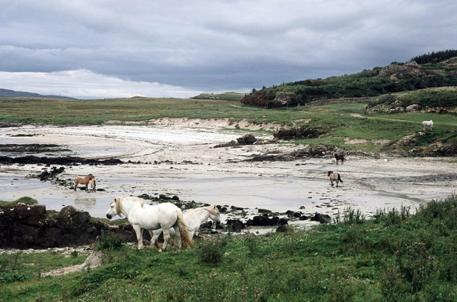 Horses on Gallanach sands