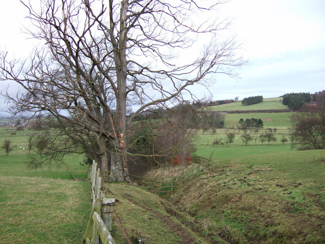 Field boundary and watercourse at Summerville
