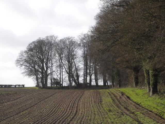 Tree lined field on Blagdon Farm