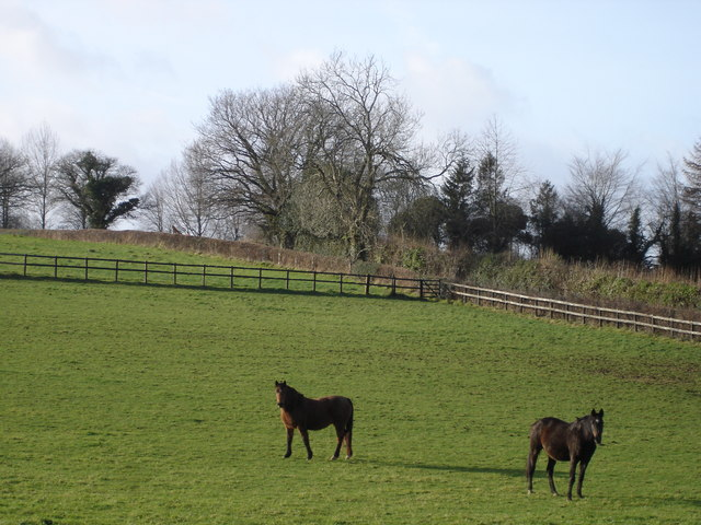 Horses on Blagdon Farm