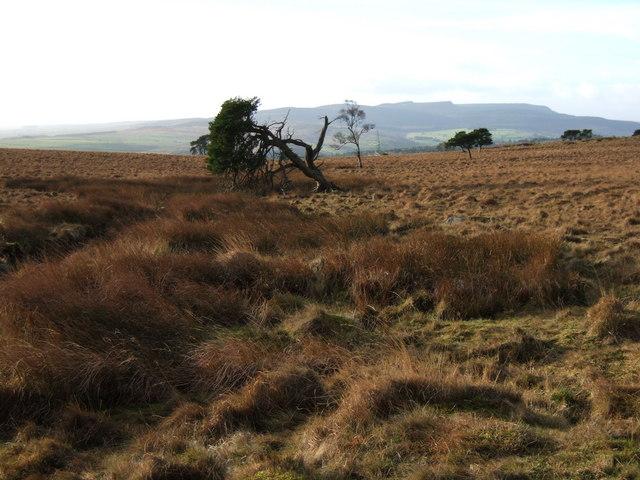 Moorland east of Cragside