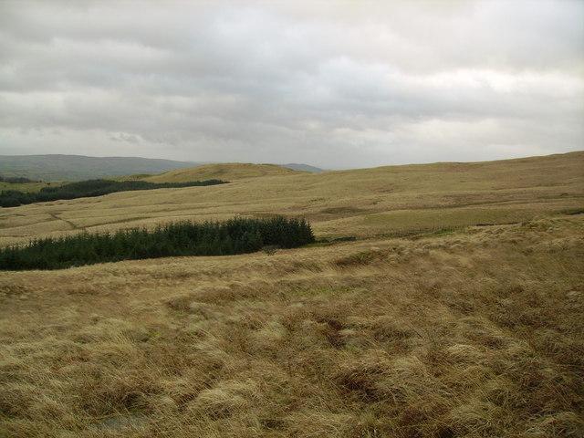 Wolfhowe Plantation