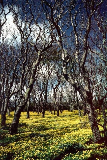 Halligarth plantation, Baltasound