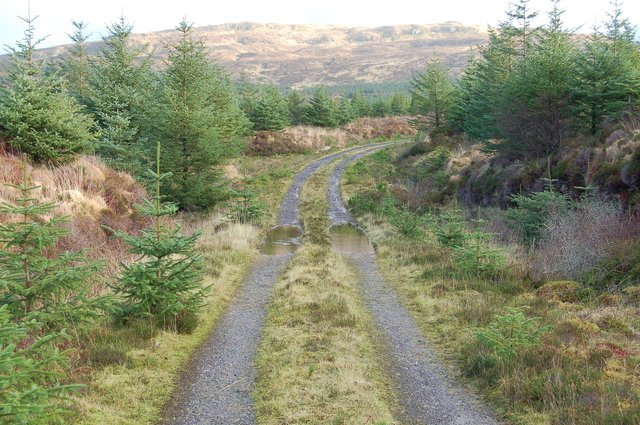 Track in Glen Brittle Forest