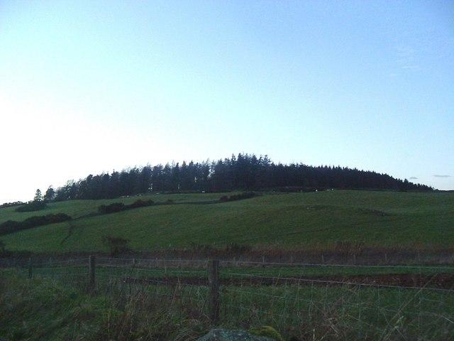 Tillybirloch Wood