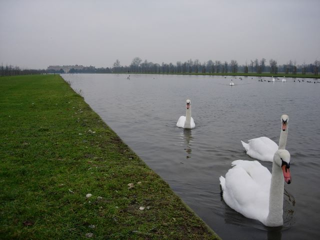 Long Water, Home Park