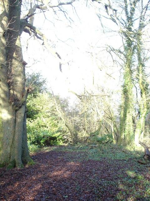 Woodland in Wimborne St Giles