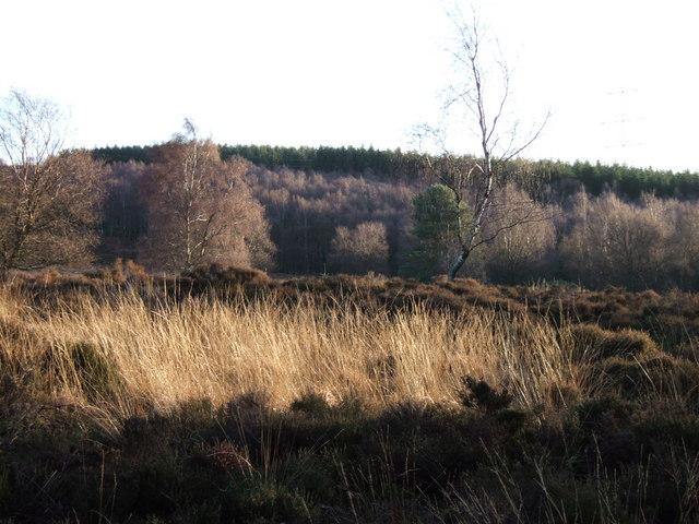 Moorland embayment at Cragside
