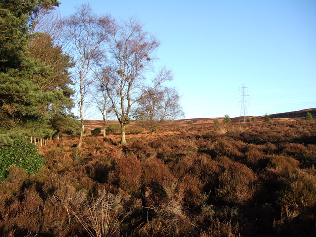 Edge of Cragside woodlands