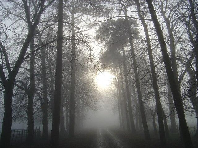 Newlands Driveway