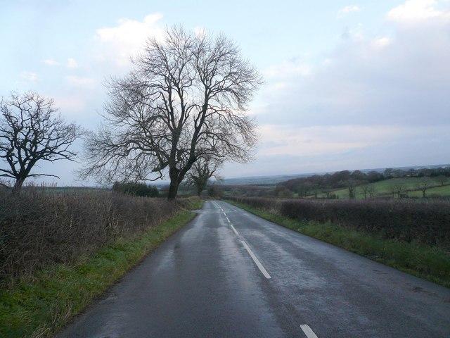 Ashover Road - Littlemoor (Leaning Trees)