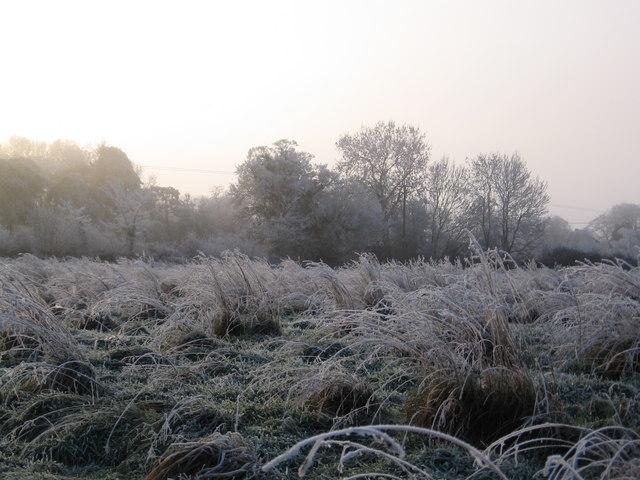 Shelton Meadow