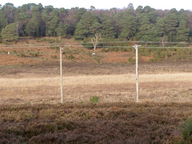 Hincheslea Bog, New Forest