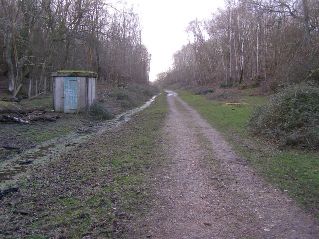 Disused railway, Blackhamsley Hill, New Forest