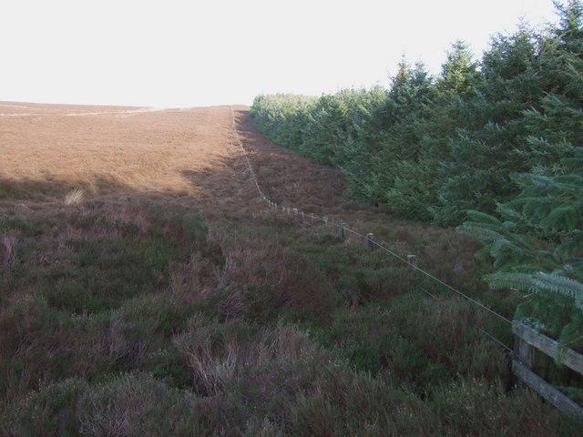 Plantation edge, Shirlaw Pike