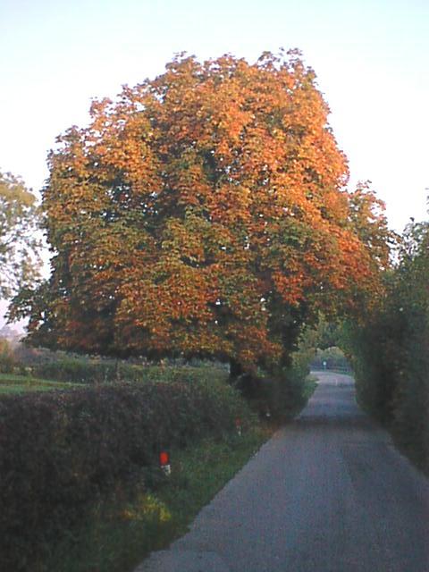 Ogston New Road (Autumn - Horse Chestnut)