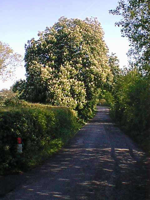Ogston New Road (Spring - Horse Chestnut)