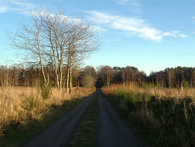 Road from Woodside