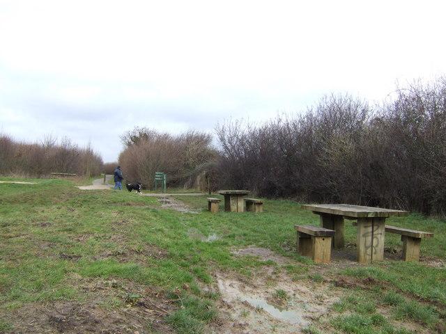 Walking the dog in Nightingale Wood