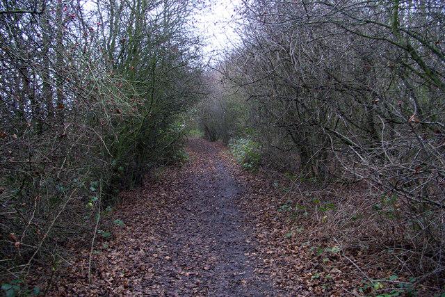 Woody Path