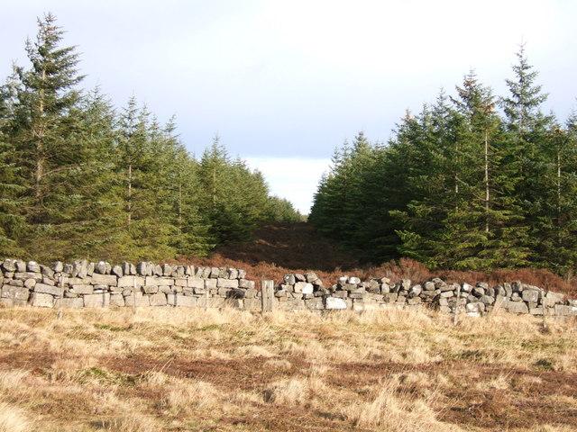 Plantation on Trough Hill