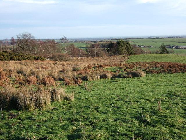 Field near Woodhead