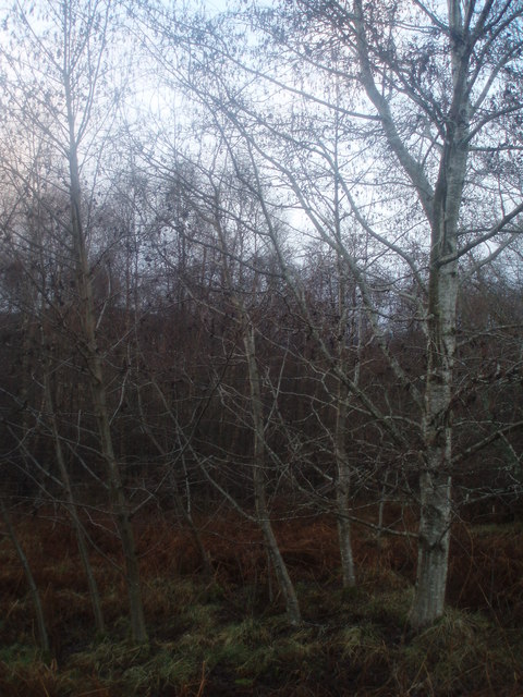 Native woodland at the road side