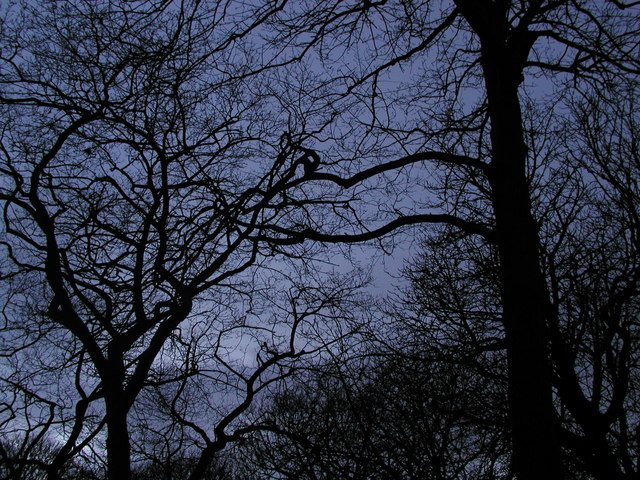 Trees at dusk in West Park