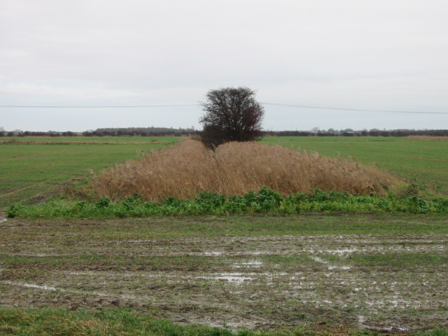 Reed filled ditch, Minster Marshes.