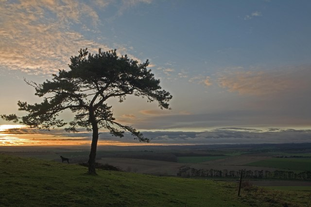 Pine tree on Pentridge Hill at sun-set  2