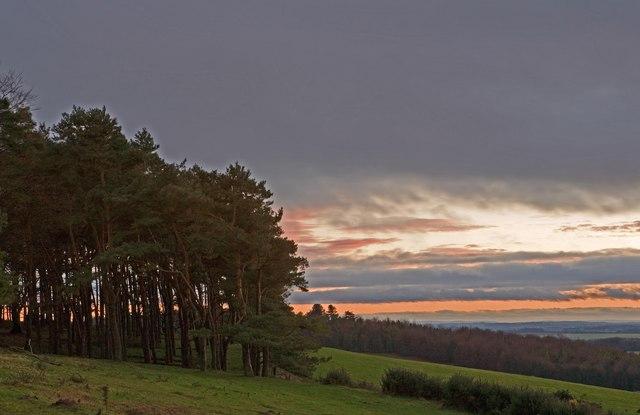 Pine Wood at Penbury Knoll & view to Blackbush Plantation