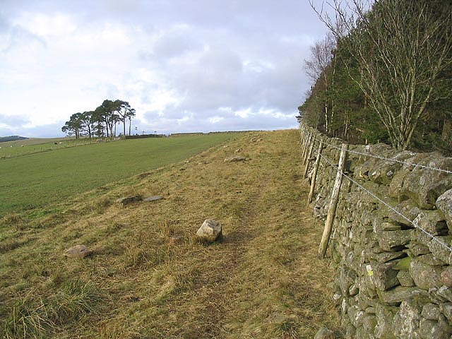 Field-woodland boundary