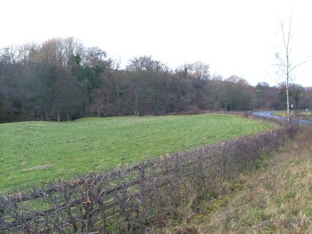 Field beside River Coquet