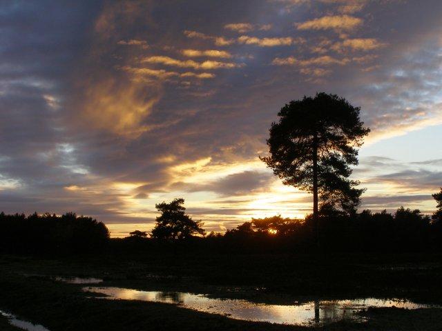 Sunset at Deerleap, New Forest
