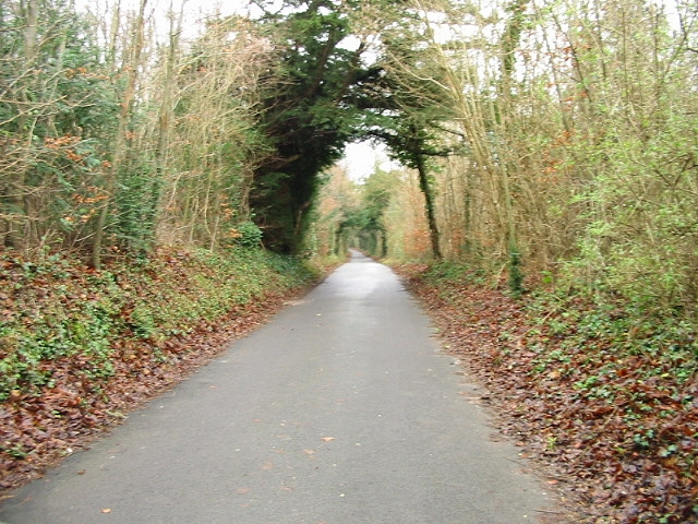 Wooded lane heading towards Frogham.