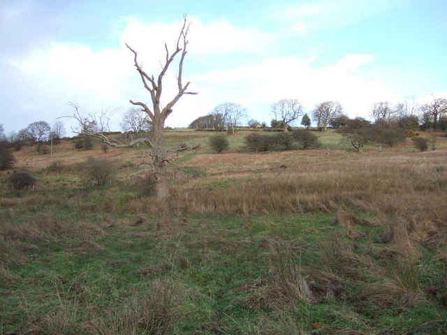 Field beside the Black Burn