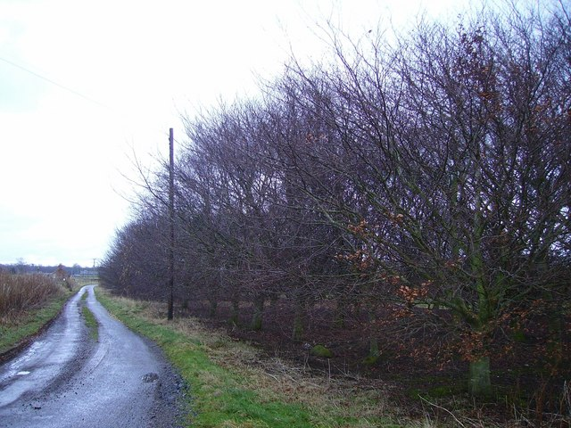 Beech Wood at farm road corner