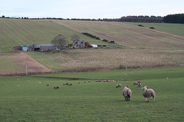Newton of Teucher Farm.
