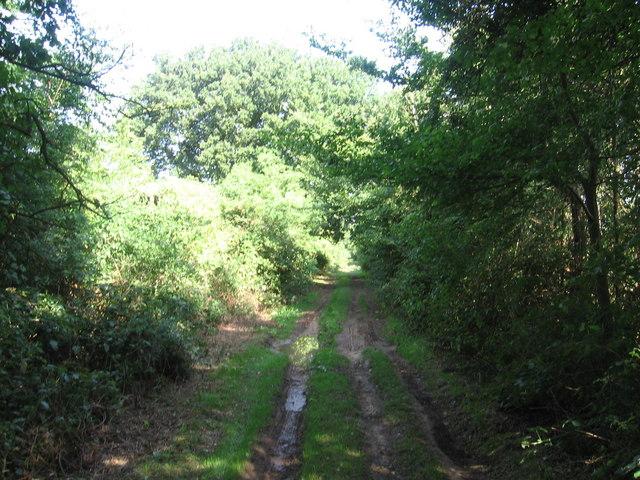Peddars Way near Great Bircham