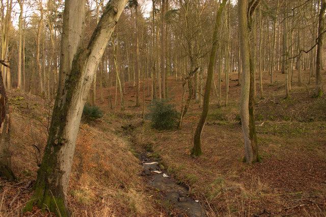 Stream in Bagley Wood.